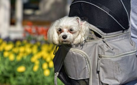 Dog Backpack Review - Post Thumbnail